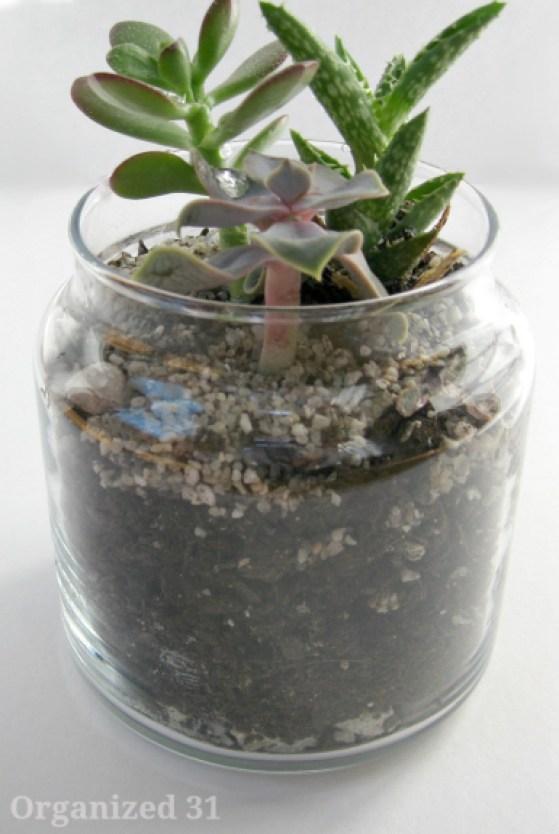 repurposed-candle-jar-planter.jpg